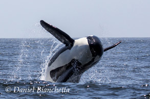 8-hour All Day whale watching trips