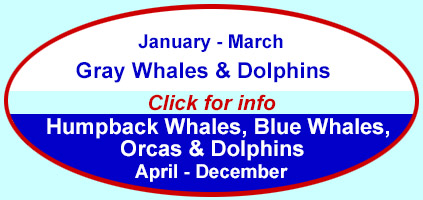 Click to learn about whale watching trips